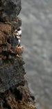Lunnefåglar på klippan Fotografering för Bildbyråer