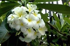 Luntom blomma Arkivfoton