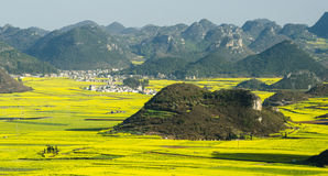 Luo canola flower Stock Photography