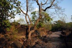 Luogo del patrimonio mondiale di Bhimbetka- Fotografie Stock