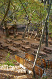 Luogo di picnic della foresta della quercia Immagine Stock