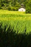 luoping在ricefield附近的横向 免版税库存图片