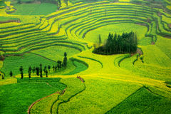 Luoping terraced landscapes Stock Image