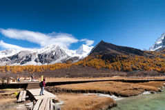 Luorong Pasture in Yading Nature Reserve. Luorong Pasture in autumn. It locate in Yading Nature Reserve. Daocheng County, Sichuan Province, China.  it is a Royalty Free Stock Photography