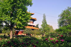 Luoyang peoni ogród Fotografia Stock