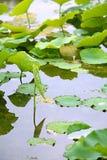 Luoyang Sui και βοτανικός κήπος περιοχών του Tang στοκ εικόνα με δικαίωμα ελεύθερης χρήσης