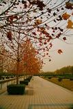Luoyang Sui en Tang-plaats Botanische Tuin stock afbeeldingen