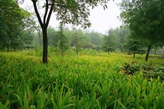 Luoyang Sui och skarp smakplatsbotanisk trädgård arkivfoto