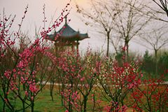 Luoyang Sui and Tang site Botanical Garden. Luoyang Sui Tang city site Botanical Garden It was built in December 2005. It covers an area of 2864 mu. It is stock images
