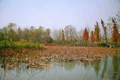 Luoyang Sui and Tang site Botanical Garden stock image