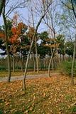 Luoyang Sui and Tang site Botanical Garden stock photos
