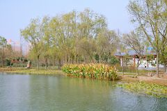Luoyang Sui and Tang site Botanical Garden royalty free stock photo