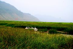 Wetland in the Yellow River, Luoyang stock image