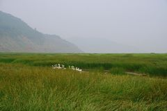 Wetland in the Yellow River, Luoyang royalty free stock images