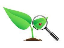 Lupa del vector un ladybug Imágenes de archivo libres de regalías