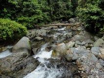 Lupa Masa rainforest på Borneo Royaltyfri Foto