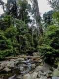 Lupa Masa rainforest på Borneo Arkivbild