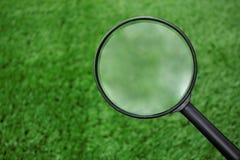 Lupa que busca en hierba Foto de archivo libre de regalías