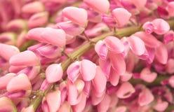 Lupin flower Stock Photo