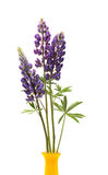 Lupin Flowers In Vase Royalty Free Stock Photography
