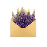Lupin i kuvertet Royaltyfri Fotografi