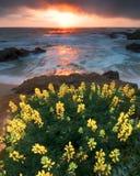 Lupine Буш в пляже стоковые изображения