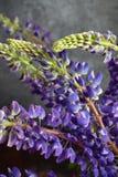 lupine Ainda a vida com roxo floresce o ramalhete no vaso Fotografia de Stock