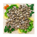 Lupine clams Stock Photos