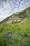 Lupine And Clouds Stock Image