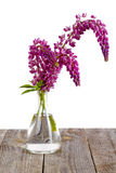 Lupine flowers in a glass vase Stock Images