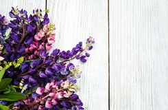 Lupine flowers on a  table Stock Image