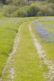 Lupine lined dirt road through spring flowers and green grass of California off Route 58, East of Santa Margarita, CA Stock Photo