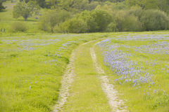 Lupine lined dirt road through spring flowers and green grass of California off Route 58, East of Santa Margarita, CA Stock Images