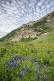 Lupine och moln Fotografering för Bildbyråer