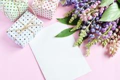 Пинк, пурпурные lupine цветки, подарки и пустой бумажный лист на розовой предпосылке День рождения, День матери, день Валентайн,  стоковые фото