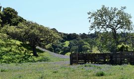 Lupine Wildflowers auf rustikaler Ranch lizenzfreie stockfotografie