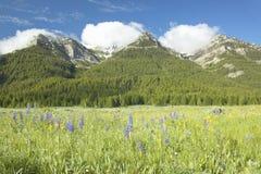 Lupine y montañas púrpuras en valle centenario cerca de Lakeview, TA Fotografía de archivo