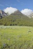 Lupine y montañas púrpuras en valle centenario cerca de Lakeview, TA Fotos de archivo libres de regalías