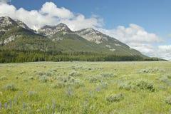 Lupine y montañas púrpuras en valle centenario cerca de Lakeview, TA Foto de archivo libre de regalías