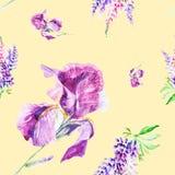 Lupines иллюстрации акварели ботанические и цветки радужки изолированные на желтой предпосылке картина безшовная иллюстрация штока