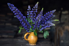 Lupines in a ceramic jug Royalty Free Stock Photo