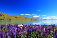 Lupines door het meer Tekapo, Nieuw Zeeland Stock Fotografie