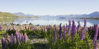 Lupines e lago Immagine Stock