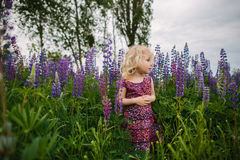 Lupines field and girl Stock Image
