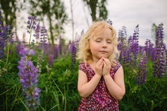 Lupines field and girl Royalty Free Stock Photos