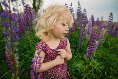 Lupines field and girl Royalty Free Stock Images
