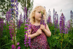 Lupines field and girl Stock Photo