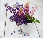 Lupines i vasen Fotografering för Bildbyråer