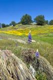 Lupines, Kalifornien vallmo och ekar Royaltyfria Foton
