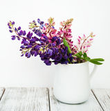 Lupines no vaso Foto de Stock